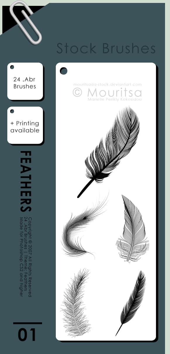 羽毛、鹅毛Photoshop笔刷下载 羽毛笔刷  wings brushes