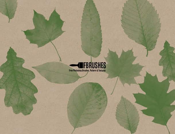 真实的树叶、叶子、绿叶PS笔刷下载