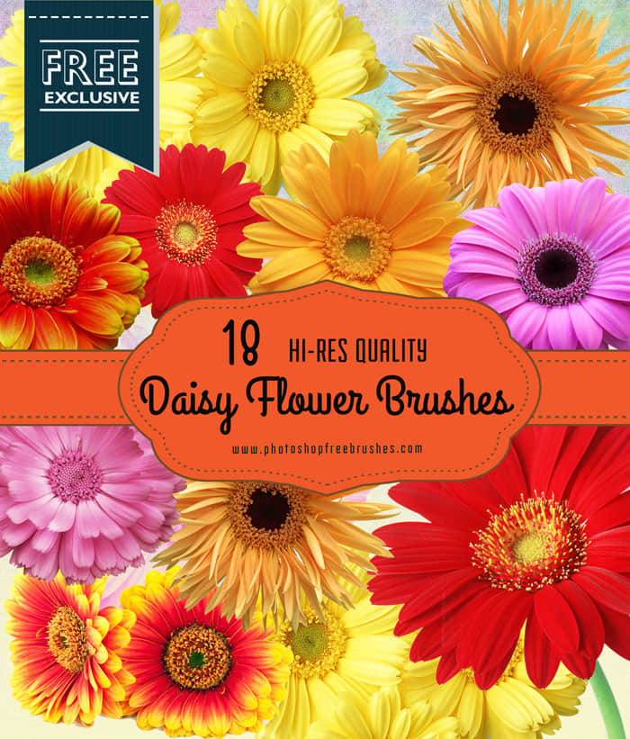 16种漂亮的雏菊花Photoshop鲜花笔刷素材 鲜花笔刷 雏菊花笔刷 花朵笔刷  plants brushes