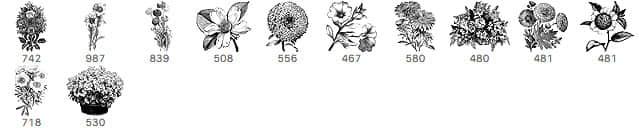 复古式手绘鲜花、花朵Photoshop笔刷下载