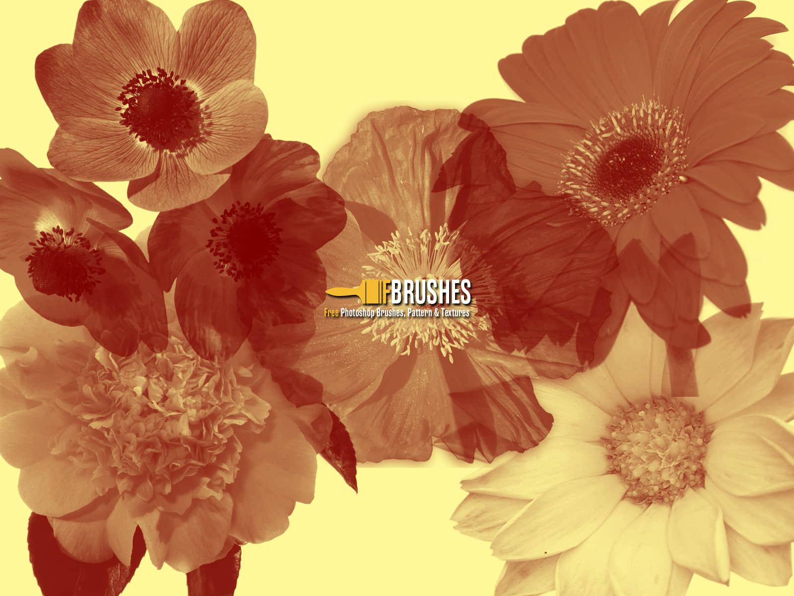 真实鲜花花朵PS笔刷素材