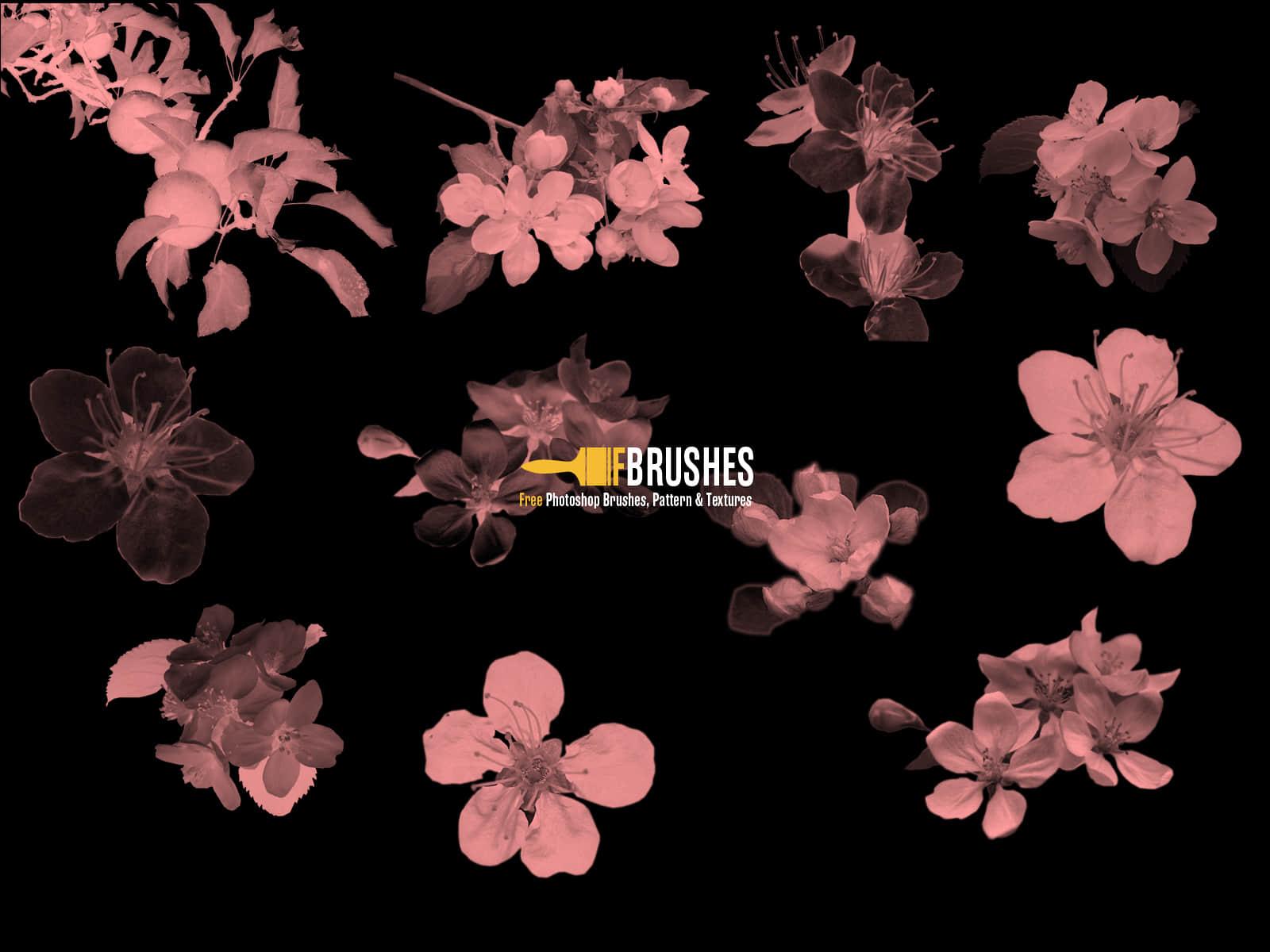 苹果花朵、鲜花PS笔刷下载 鲜花笔刷 花朵笔刷  plants brushes