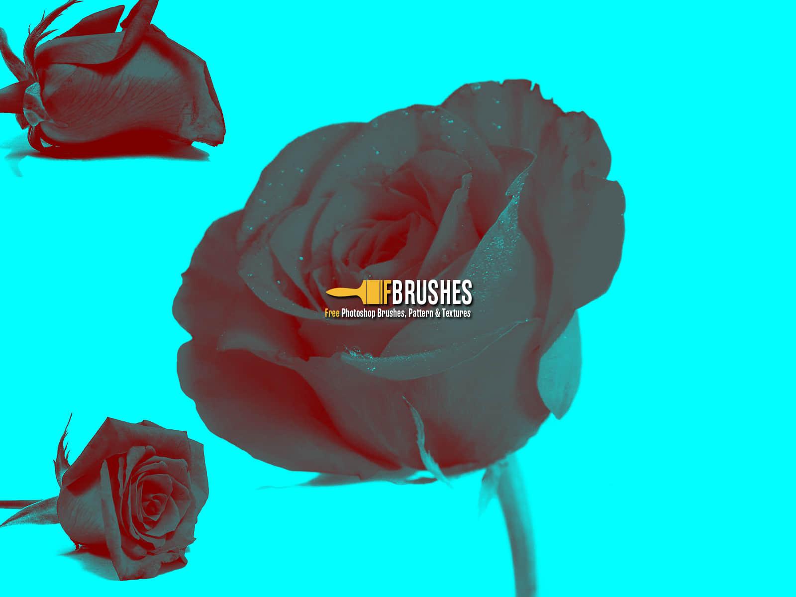 真实的玫瑰花鲜花Photoshop花朵笔刷 鲜花笔刷 花朵笔刷 玫瑰花笔刷  plants brushes
