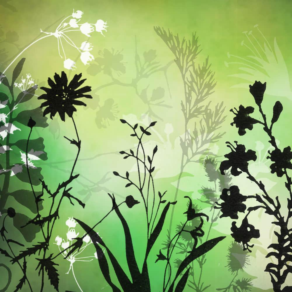 23种免费的植物花纹图案Photoshop笔刷下载