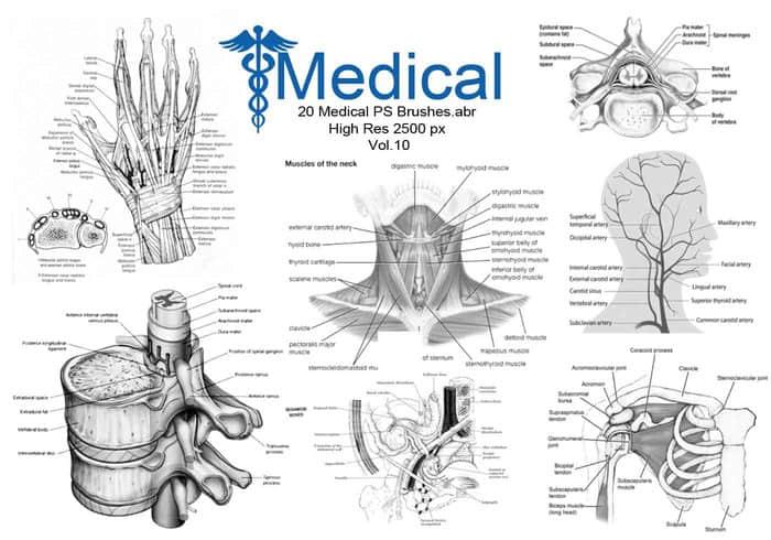 20个人体医学解剖图形PS高清笔刷素材下载 #.1