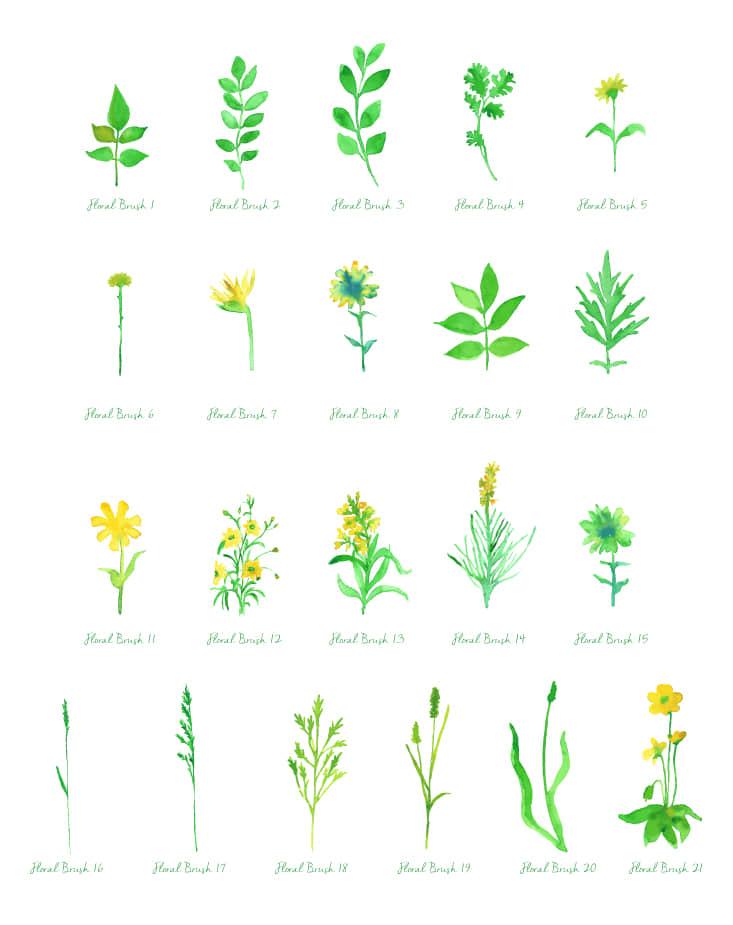 水彩、水粉、水墨画式植物图案、小草绿叶PS笔刷下载 水粉笔刷 水彩笔刷 水墨笔刷  plants brushes