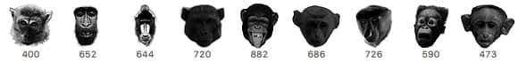 大猩猩头部、狒狒头、猴子头颅PS笔刷下载