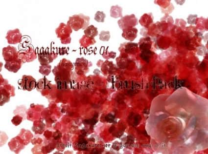血色玫瑰花朵Photoshop鲜花笔刷 鲜花笔刷 血玫瑰笔刷 玫瑰花笔刷  flowers brushes plants brushes