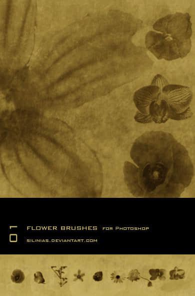 鲜花、花朵造影效果PS笔刷下载 花朵笔刷  flowers brushes