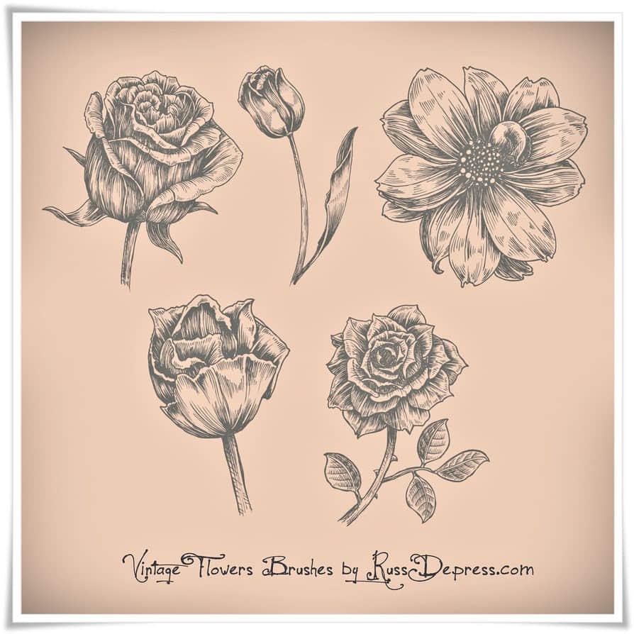 漂亮的手绘玫瑰花、鲜花花朵图案PS花朵笔刷 鲜花花朵笔刷 玫瑰花笔刷 手绘花朵笔刷 印花笔刷  flowers brushes