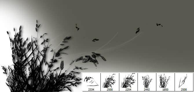 6个高清野草、草丛剪影PS笔刷素材