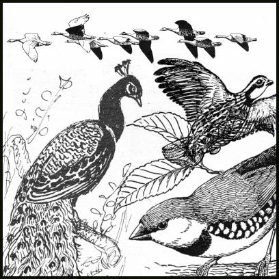 手绘孔雀等飞鸟图形PS笔刷素材(PNG格式素材)