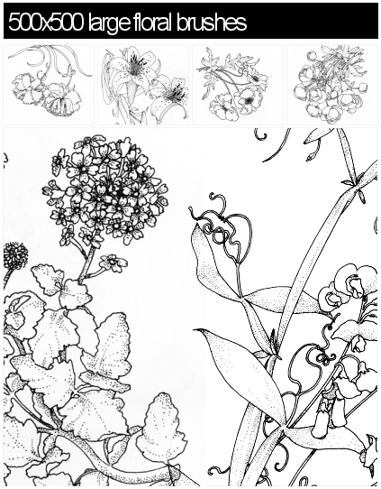 漂亮的手绘花朵、鲜花图案PS笔刷素材下载(PNG图片格式素材)