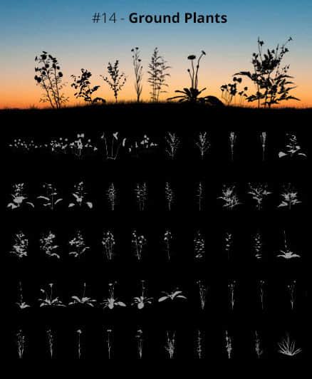 53种野草、杂草、花草剪影图案Photoshop笔刷素材 野草笔刷 花草笔刷  plants brushes