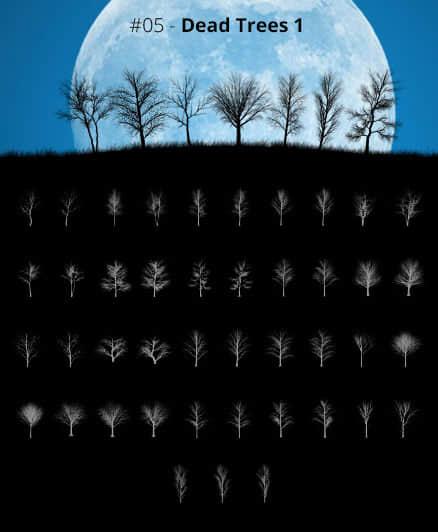 43种光秃秃的大树剪影造型Photoshop干枯的森林树木笔刷