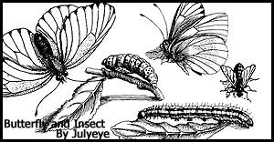 手绘昆虫、蝴蝶、毛毛虫、苍蝇图形PS笔刷素材下载 蝴蝶笔刷 苍蝇笔刷 毛毛虫笔刷  insects brushes
