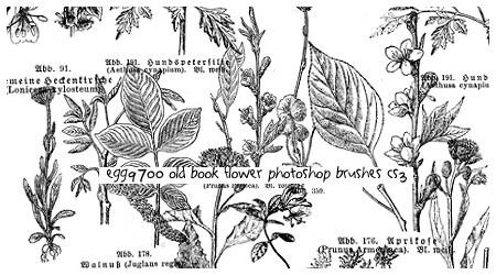 手绘植物树叶鲜花造型PS笔刷素材下载