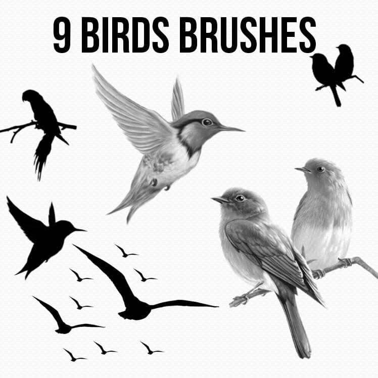9种小鸟剪影效果PS笔刷素材下载