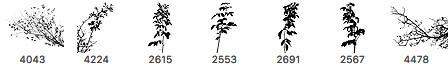 草木植物剪影图案PS笔刷素材下载