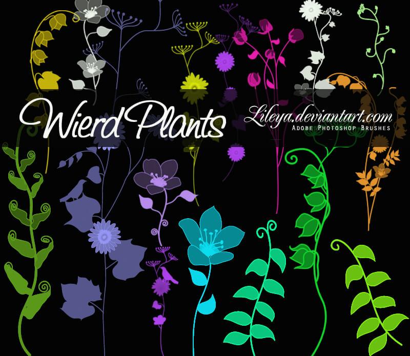 漂亮的手绘植物野草、野花图案PS笔刷素材下载