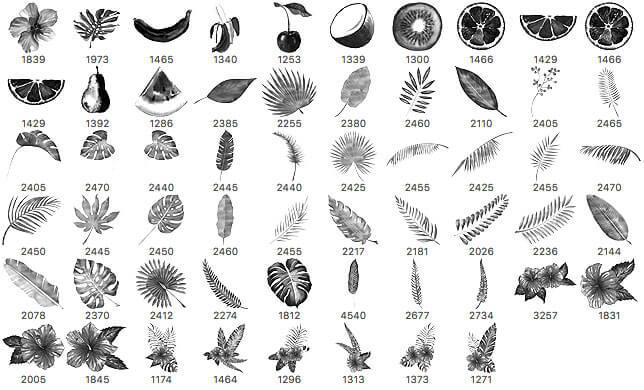 58水彩式水果图形、植物叶子、鲜花等图案PS笔刷素材下载