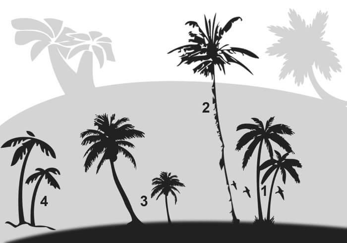 椰子树、椰树剪影Photoshop笔刷素材下载 椰树笔刷 椰子树笔刷  plants brushes