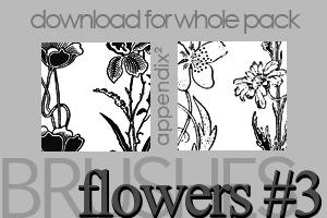 漂亮的手绘复古式植物鲜花图案Photoshop笔刷素材下载