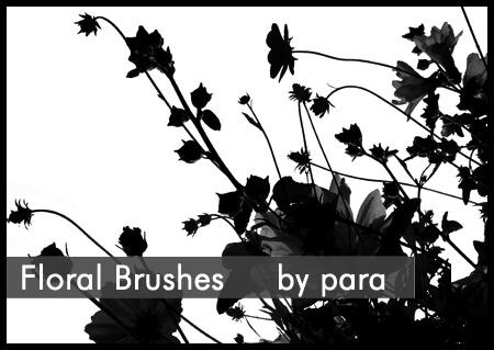 漂亮的植物花朵剪影图形PS笔刷素材下载 花丛剪影笔刷 植物花朵笔刷  flowers brushes