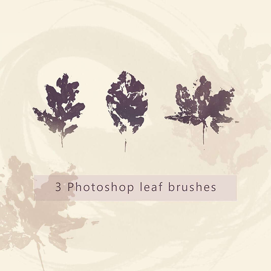 橡树树叶、枫叶、秋天枯叶、落叶剪影图形PS笔刷素材