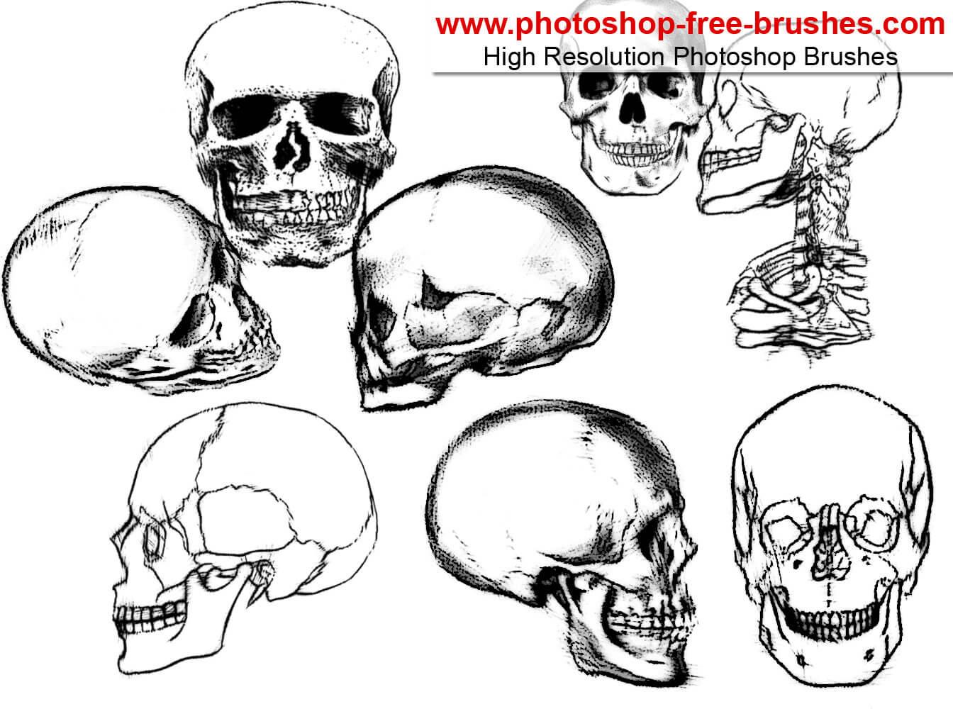 素描式恐怖的骷髅头图案Photoshop笔刷下载