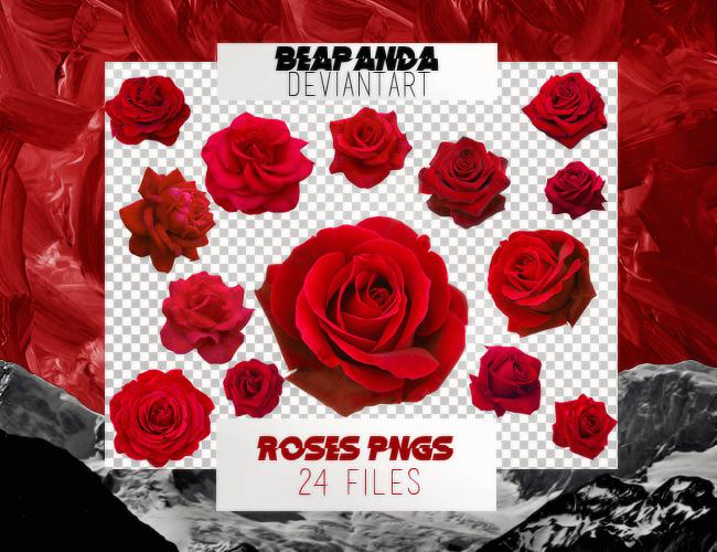 24种漂亮的盛开的玫瑰花朵图案PS笔刷素材下载