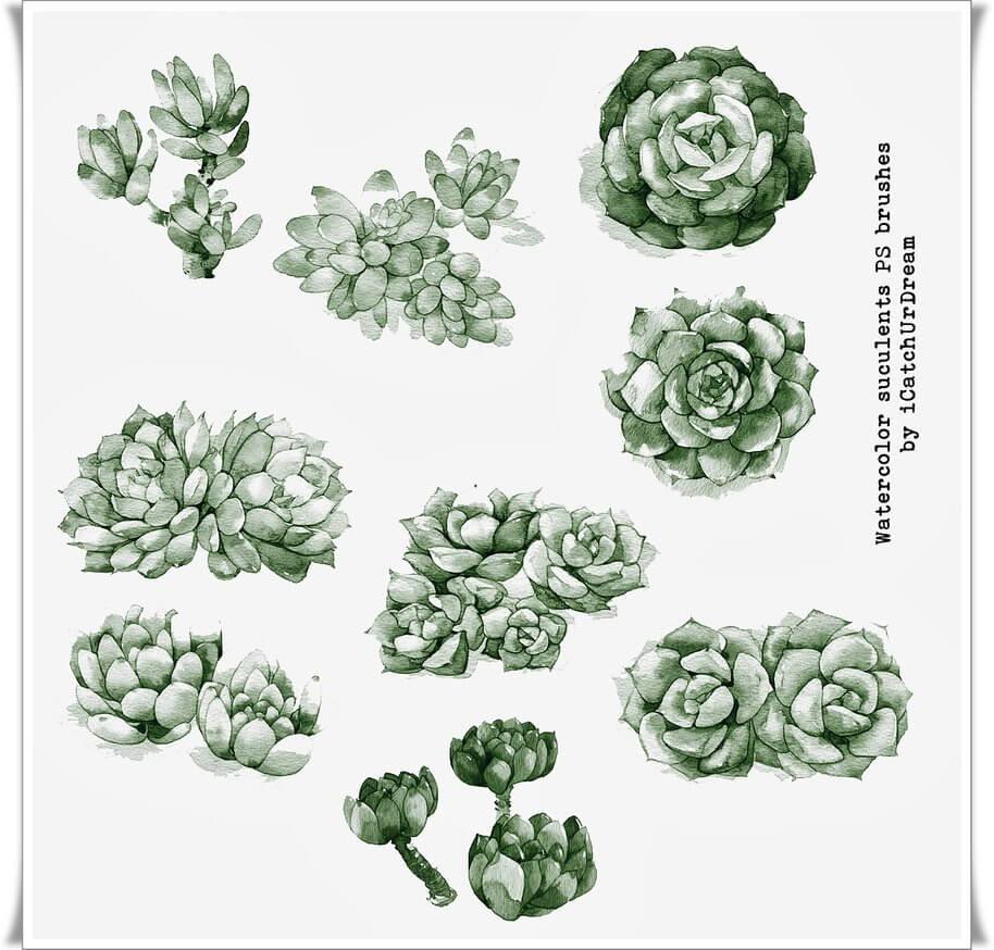 漂亮的水彩手绘花朵鲜花图案Photoshop笔刷素材下载 水彩花朵笔刷 手绘鲜花笔刷  flowers brushes