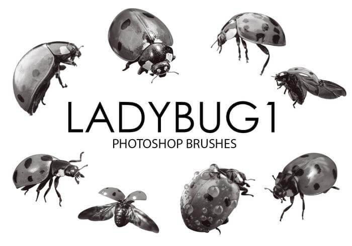 瓢虫、昆虫、甲虫PS笔刷素材下载 甲虫笔刷 瓢虫笔刷  insects brushes