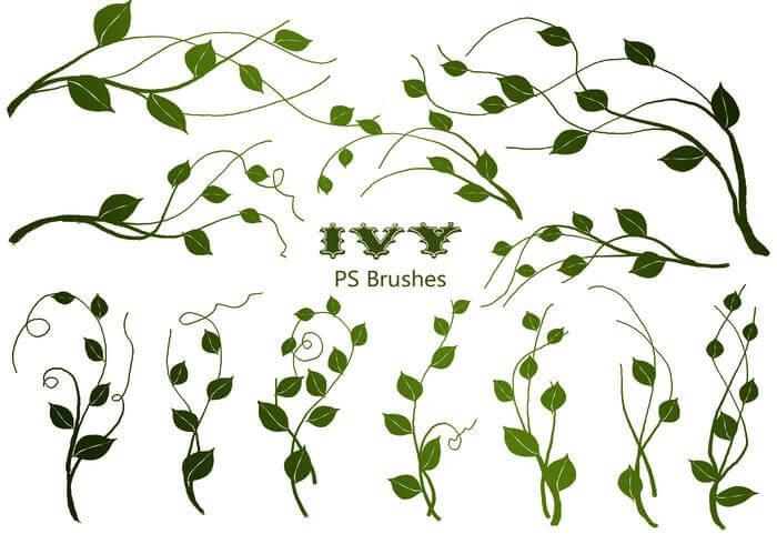 20种常青藤植物绿叶图案PS笔刷素材下载 植物枝条笔刷 常青藤笔刷  adornment brushes flowers brushes