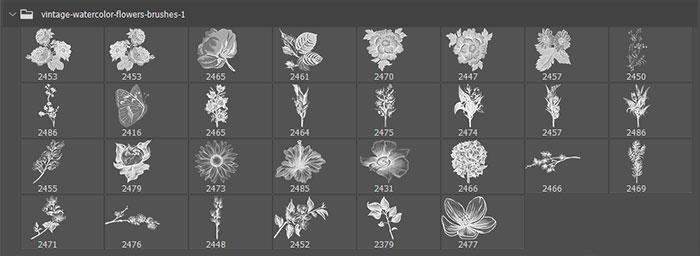 30种复古式水彩花卉图案、盛开的艳丽鲜花花朵图形PS笔刷免费下载