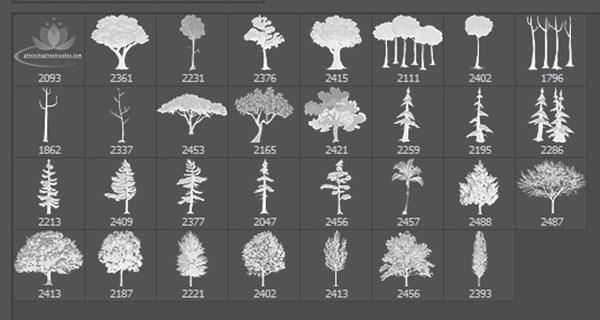 30种高品质的树木、大树造影图案素材PS笔刷文件下载
