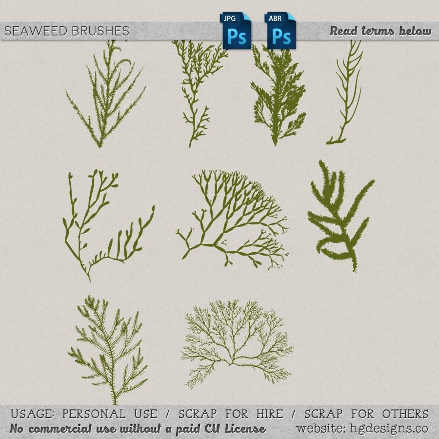 海藻植物图案PS笔刷下载