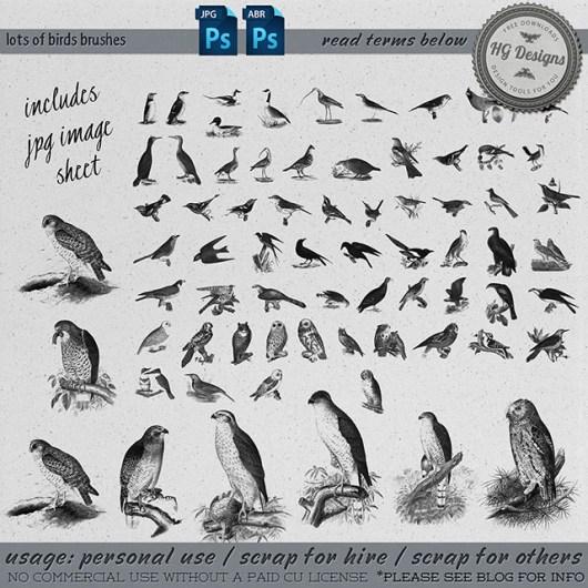 各种野生鸟类图形PS笔刷素材下载