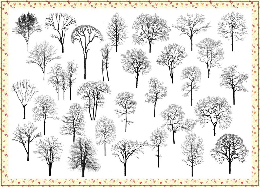 森林树枝、大树剪影Photoshop树木笔刷素材