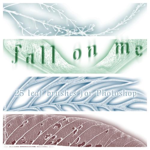 25种叶子造型、树叶图案Photoshop笔刷素材下载