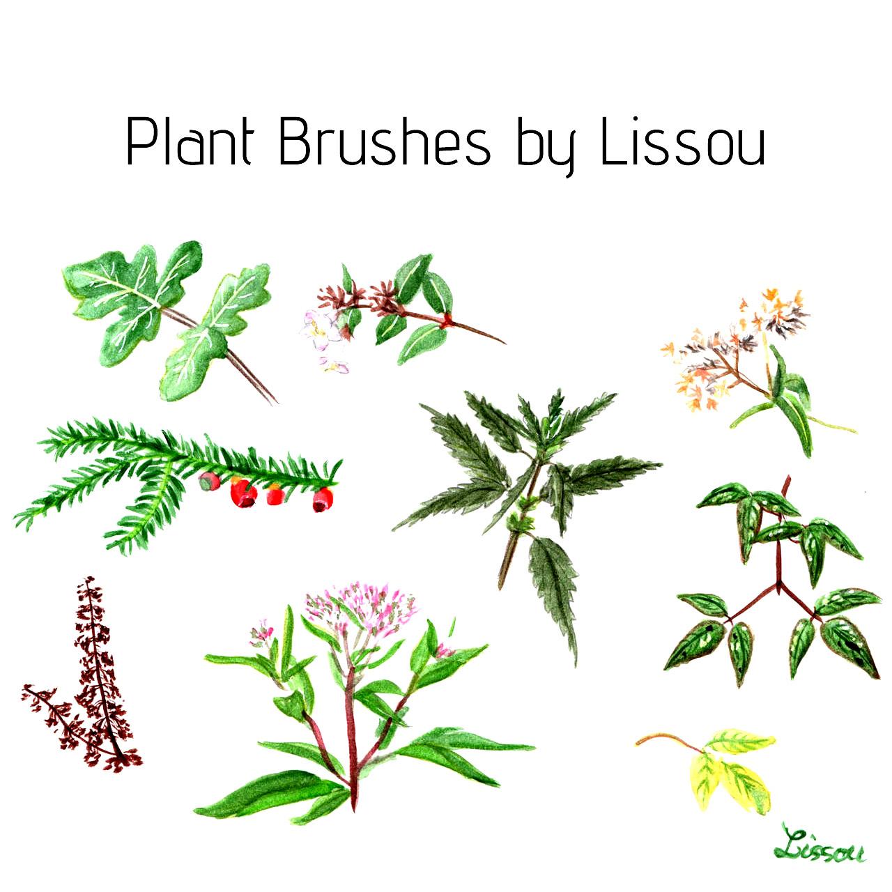 手绘水彩植物野草、野花图形PS笔刷下载