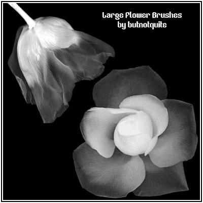 多种鲜花花瓣、花朵近景PS笔刷素材下载