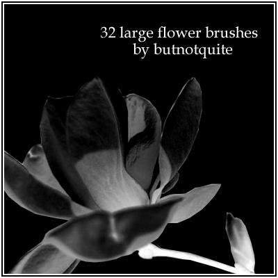 32种鲜花花朵图案素材PS笔刷免费下载