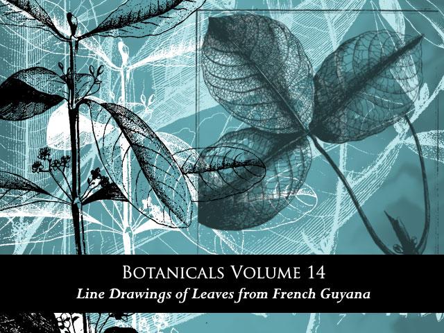 手绘植物叶子图案PS素材免费下载