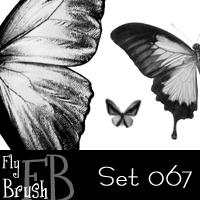 蝴蝶图案、蝴蝶标本PS笔刷下载