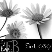 漂亮的菊苣花朵、鲜花图案PS笔刷下载
