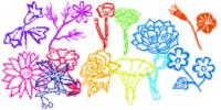 手绘鲜花、线框花朵图案PS笔刷下载