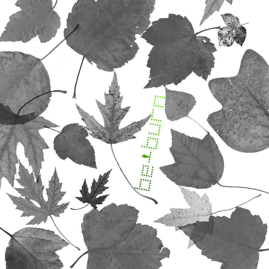真实的枫叶、落叶、树叶、梧桐叶等PS叶子笔刷素材