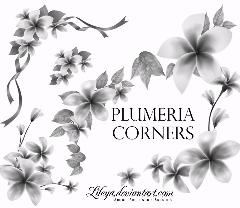 漂亮植物鲜花花朵图案PS笔刷素材