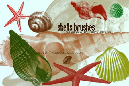 海螺、海星、贝壳、扇贝Photoshop笔刷素材